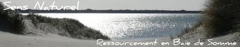 Gîte 4 personnes 3 clés Clévancances et Chambre Entre Mer et Forêt à Quend Plage près de Fort Mahon à 5 mm de la mer et du Golf et Aquaclub de Belle Dune entre Baie de Somme et Baie d'Authie