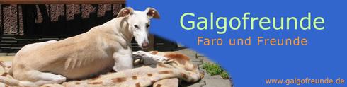 Homepage von Sybille mit ihren Galgos Faro und Xena