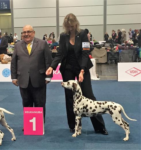 Vize-Weltsiegerin auf der World Dog Show 2017