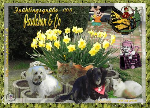 einen wunderschönen Frühling wünscht Paulchen ,Flöckchen ,Korrie und unser Tschechenbubi Koudy