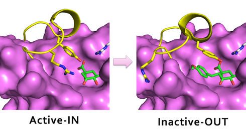 The inhibitor blocks the entrance of the essential Arg.