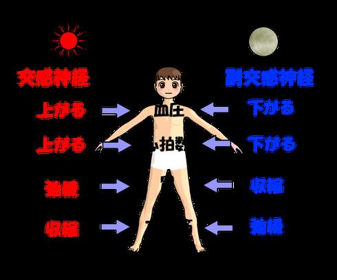 自律神経の機能