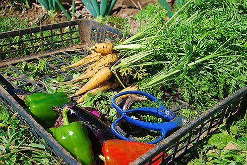 当店の食材はできる限りの自家製の野菜・果物(無農薬・有機肥料・EM菌)を使っております