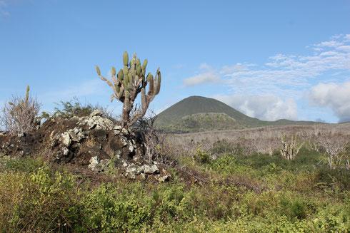 Die Galápagos Insel Floreana ist berühmt aufgrund der interessanten Siedlungsgeschichte