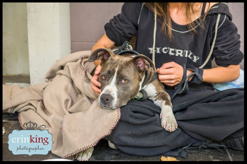 Photo courtesy of https://www.petsofthehomeless.org/