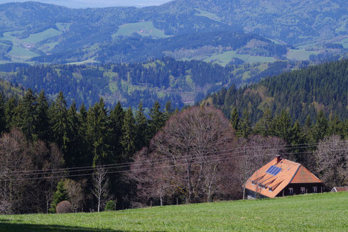 farmhouse, nature, Black Forest