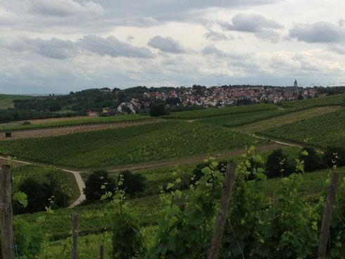 Weinberge mit Blick auf Zornheim