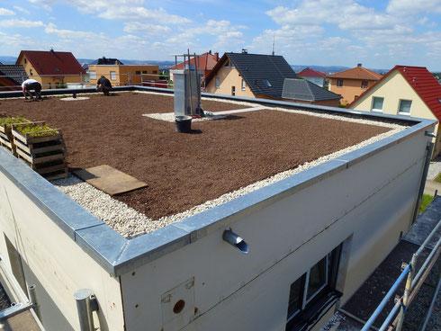 Pflanzung Sedum mit toller Aussicht vom Schönfelder Hochland