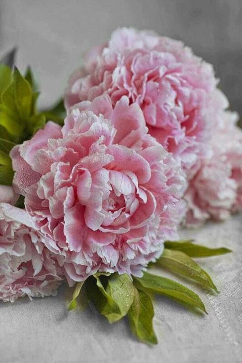 Arreglos Florales Página Web De Capella Decoracion