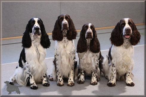 Team Iserlohn: Milo, Hoppla, Charmin und ihr Sohn Lewis