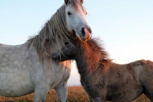 Alles für Ihr Pferd