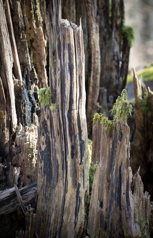 Zinnen aus Holz