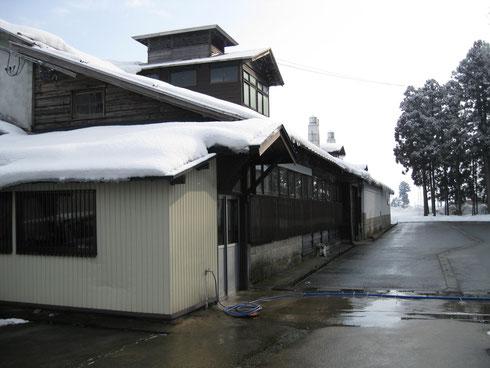 秋田の伝統的な清酒製造所の醸造技術と 設備を利用したNS乳酸菌培養プラント。