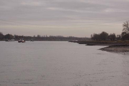 Der Rhein: Ein Habitat von Stylurus flavipes.