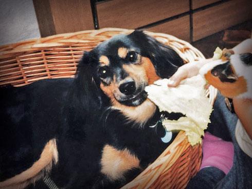 hundestrand Blog Autofahren mit Hund Tipps Hundegeschichte