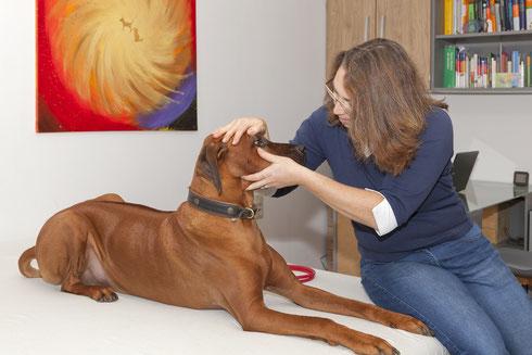 Allgemeine Untersuchung am Hund