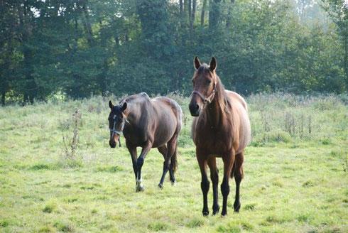 Développer son intelligence émotionnelle par la relation à pied avec le cheval.