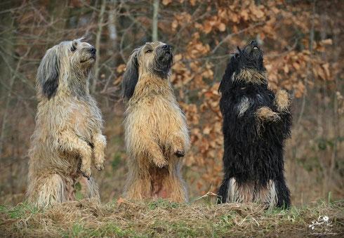 (Fotos: Anja Eizenberger) Wo steigt endlich die Party ? (Benni, Aila und Lili)