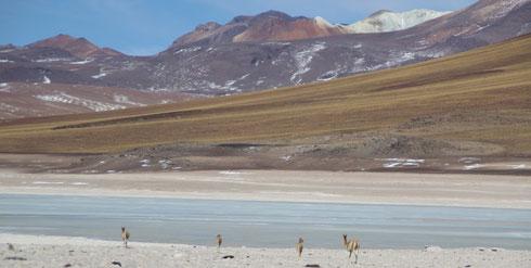 Altiplano Bolivien 4800m