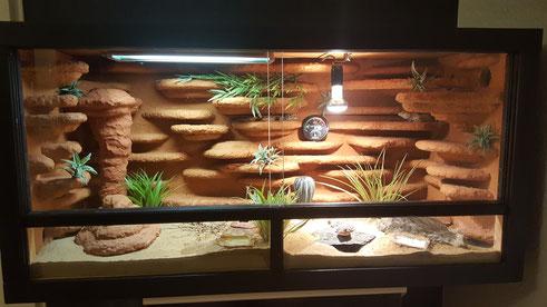 meine terrarien leopardgecko dreams. Black Bedroom Furniture Sets. Home Design Ideas
