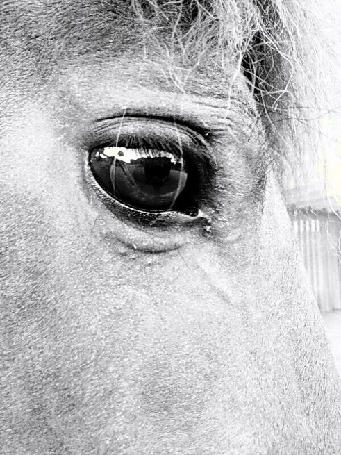 Lisas Pferd