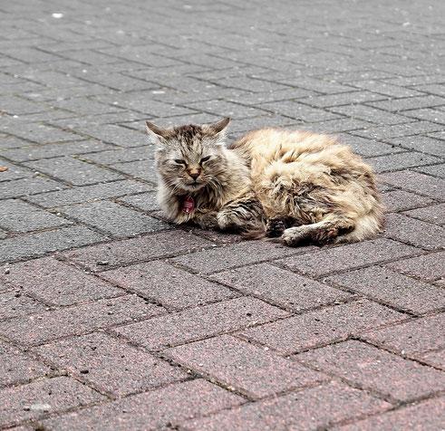 Eine Katze aus Freudenburg (August 2012)