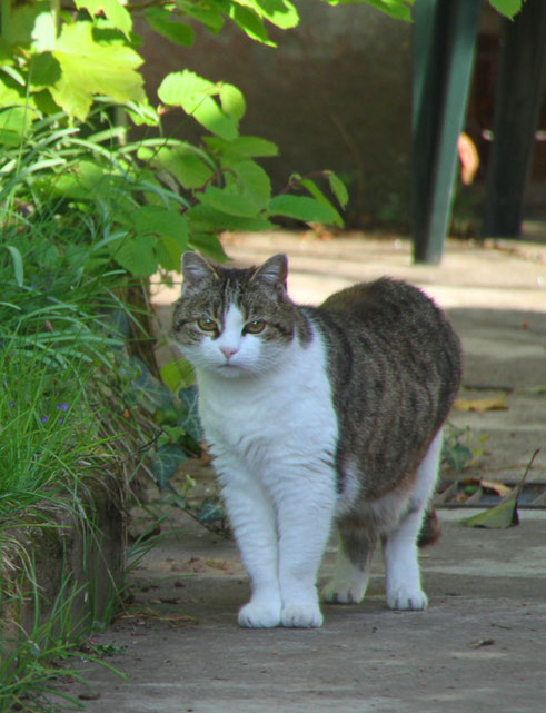 Kilian bei uns im Garten im April 2010