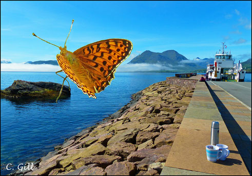 """Inverted Cloud: Fritillary Butterfly on Raasay"" by Caroline Gill - UK"