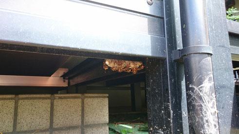 ウッドデッキの下に作ったハチの巣
