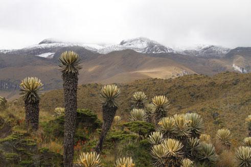 Vulkan Santa Isabel Frailejones Los Nevados Nationalpark Trekking Lagune