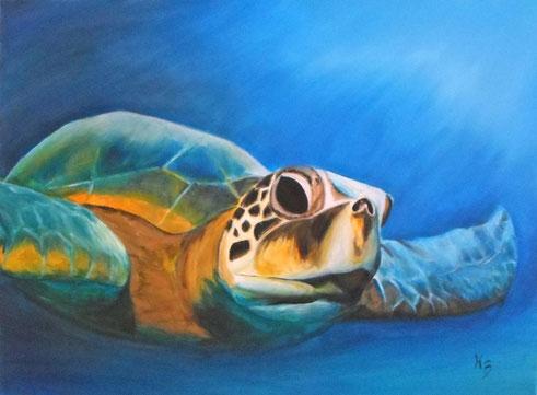 Turtle  Acryl auf Leinwand 60x80cm
