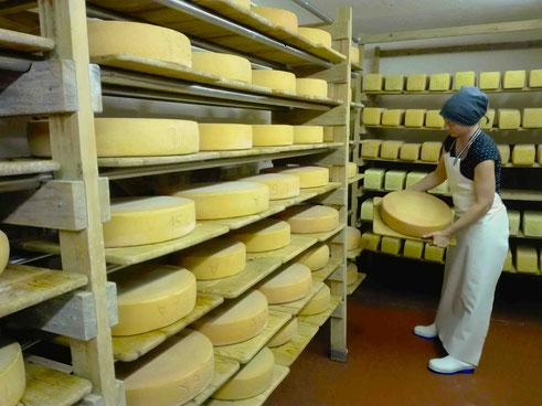 Besuch des Buschberghofs: Die Herstellung von Käse gilt im Rahmen als nicht wettbewerbsfähig. Selbst engagierte Betriebe produzieren zumeist nur eine Käsesorte. Direktvermarktung macht sogar 5-7 Sorten möglich.