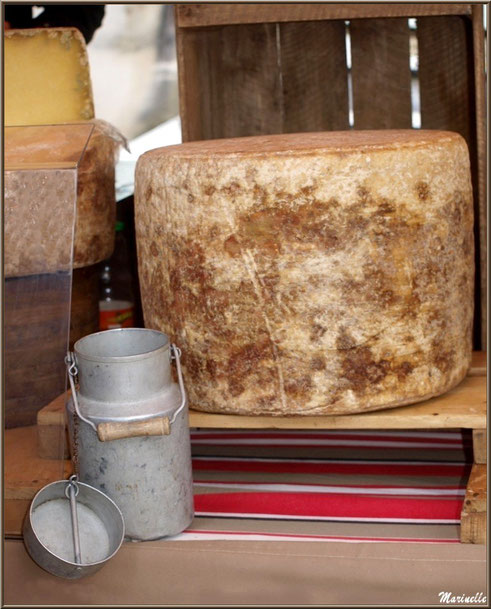 Etal de fromage, Fête au Fromage, Hera deu Hromatge, à Laruns en Vallée d'Ossau (64)