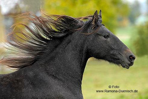 foto: www.Ramona-Duenisch.de