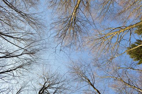 Baumzelt Solling, Blick in die Bäume