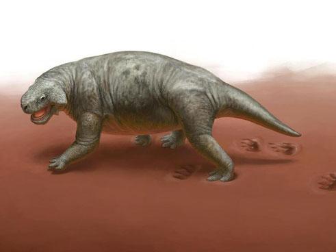 Die Backenechse, Vorfahre der Dinosaurier, in der Rekonstruktion mit deutlich erkennbaren Fußspuren. Foto: Dinosaurier Museum Altmühltal