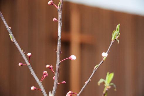 〈キリスト者にとって、死はおわりではありません。新しい命の芽吹きを見いだせるのです〉