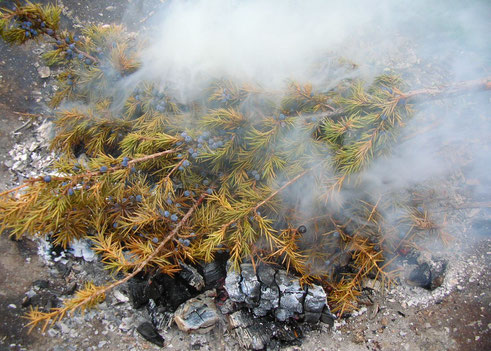 Wacholder Sammeln Juniperus communis juniper incense Räuchern Räucherwerk Räucherung Ritual