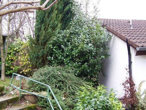 Ausgangszustand: Büsche und Bäume am Hausrand. Auch die Terrasse existiert hier noch nicht.