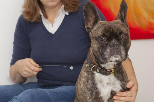 Kinesiologie für den Hund