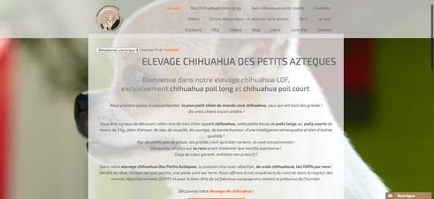 site d'élevage chihuahua