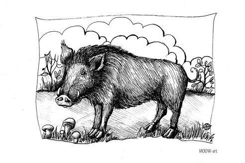 wild boar_Wildschwein