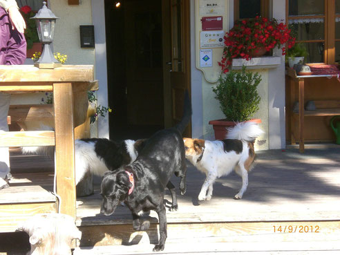 Colin u. Bouncer mit Paula vom Gasthof zum Engel in Alpersbach/Hinterzarten