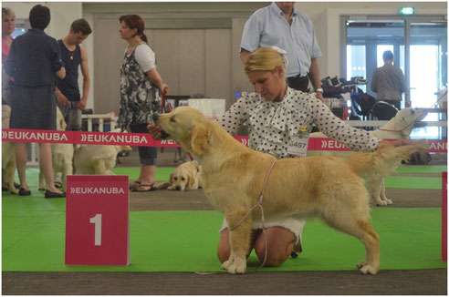 Butterfl'Highland Just en Haute Couture remporte la classe Puppy!!!