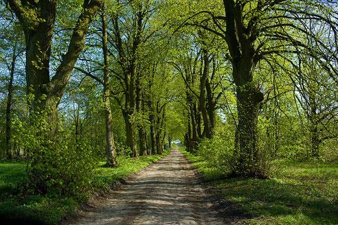 Anfang der Kopfsteinpflaster-Allee im Dorf.