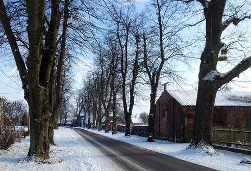 Die Linden im Dorfkern.
