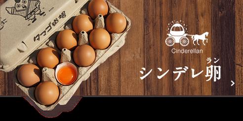 シンデレ卵(ラン)