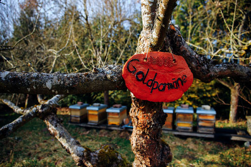 Bienensummen im Hermannsgarten