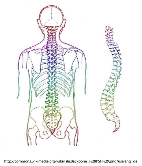 ärztliche Osteopathie bei Blockierungen der Wirbelsäule