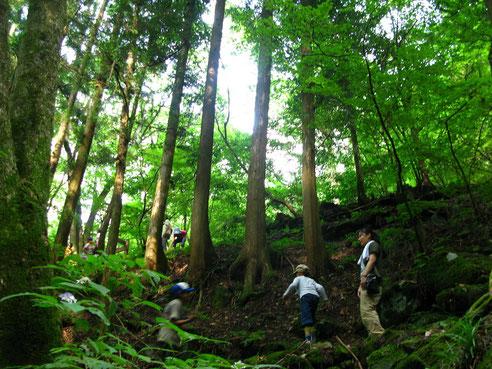 園内には東京とは思えない豊かな自然が広がる